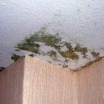 Schimmelbildung an einer massiven, ungedämmten Geschossdecke zum kalten Dachraum